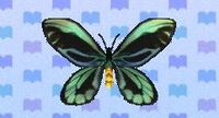 Birdwing butterfly encyclopedia (New Leaf)