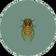 Evening Cicada (City Folk)