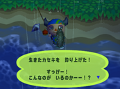 Coelacanth (Animal Forest e+ caught)2