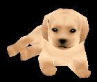 Labradormodeldlccf