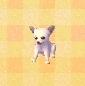 Chihuahua NL