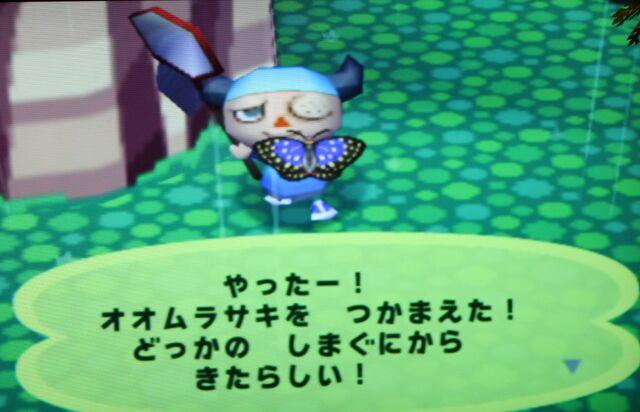 File:IMG 5442 purple butterfly.jpg