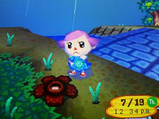 File:Rafflesia.jpg