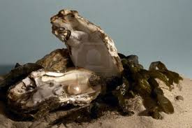 File:Pearl oyster.jpg