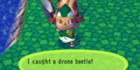 Drone beetle