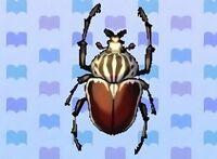 Goliath beetle encyclopedia (New Leaf)
