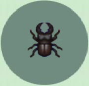 File:Mountain beetle p.png