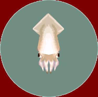 Squid (City Folk)