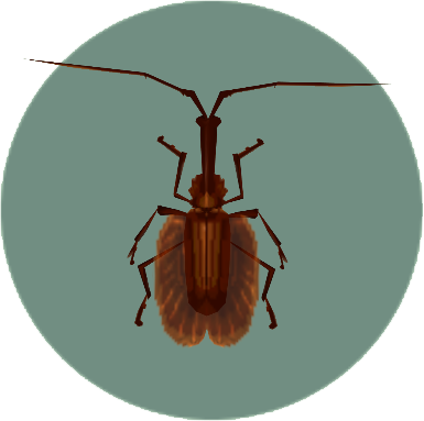 File:Violin Beetle (City Folk).png