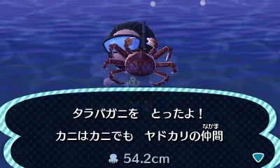File:Red king crab.jpg