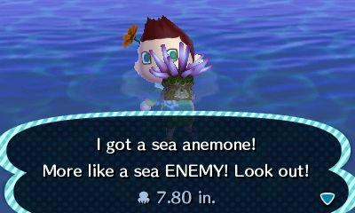 File:HNI 0089 sea anemone.jpg