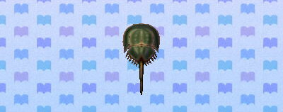 File:Horseshoe Crab.jpg