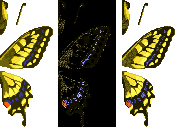 File:Tiger Butterfly (City Folk texture design).png