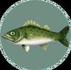 Sea Bass (City Folk)
