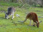 Mainimage australia-wildlife3