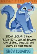 Jamaa-Journal Vol-196 Snow-Leopards