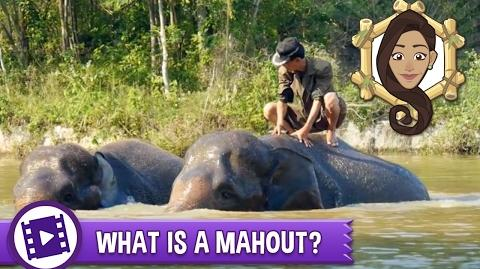 Gabby Wild - What is a mahout?