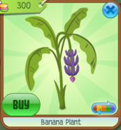 BananaPlant Purple(2)
