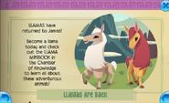 Llamas are back Jamaa Journal