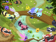 Animal jam raccoon wallpaper