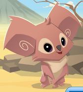 Updated Koala
