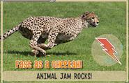 Cheetahjag