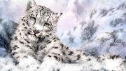 Snow-leopard-light-96557