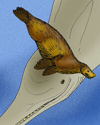 Enaliarctos emlongi-Macrodelphinus