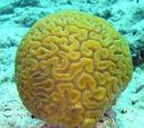 Brain Sponge