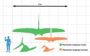 220px-Pteranodon scale