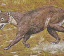 Hemicyonidae