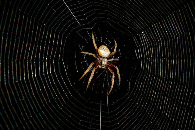 File:Spider with Web.jpg