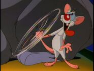 Dim-witted mouse