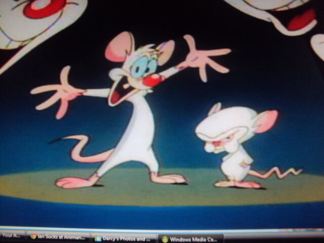 File:Pinky and the Brainy.jpg