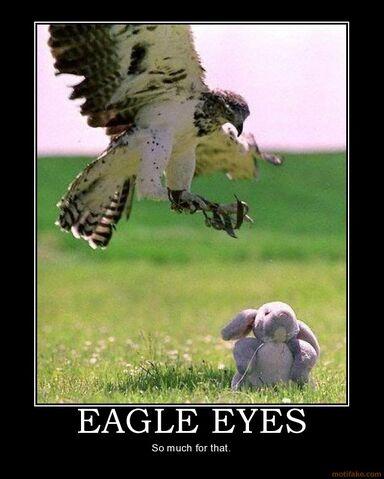 File:Eagle eyes -.-''.jpg