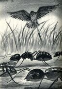 Animorphs morphed as ants The Predator Japanese illustration
