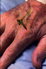 Animorph decision book 18 inside cover mosquito