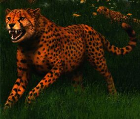 Cheetah inside cover book 37