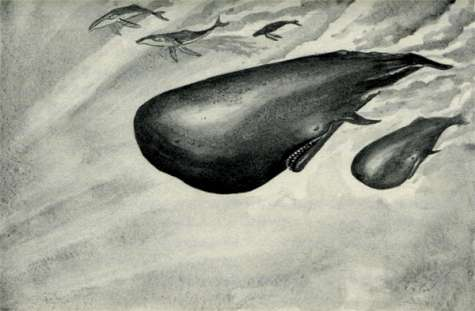 File:Animorphs are saved by whales The Message Japanese illustration.jpg