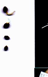 2007-02-09-seeds