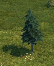 Tree full grown