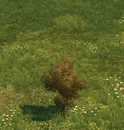 Tree small