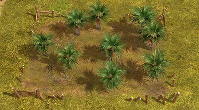 Date farm field