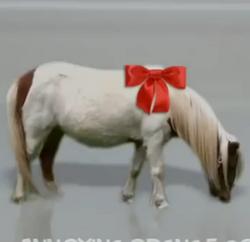 Wii Pony