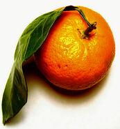 Quest for orange
