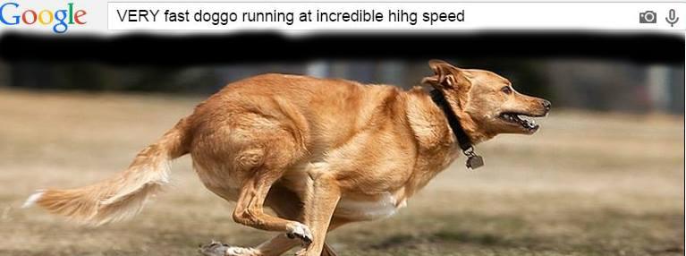 VERY fast doggo running at incredible hihg speeds