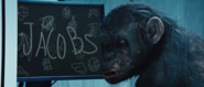 Koba-rise-of-the-planet-of-the-apes