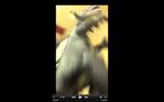 Screen Shot 2016-07-22 at 11.51.48 AM