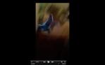 Screen Shot 2016-07-27 at 2.02.53 PM