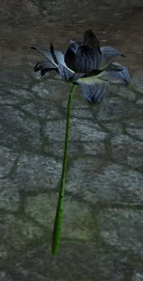 File:Black lotus.jpg